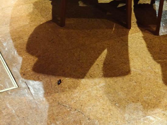 エーデルささゆりの会場に落ちていた昆虫の死骸