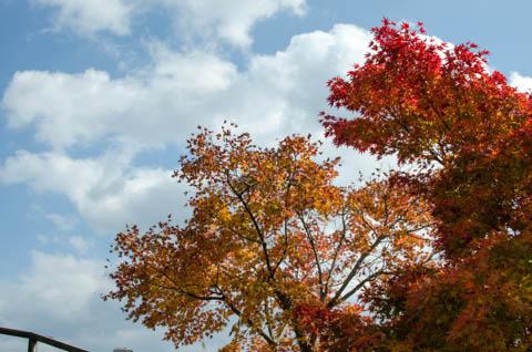 草野心平記念文学館の外の紅葉