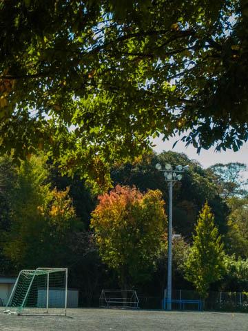 古河市立仁連小学校の校庭の紅葉